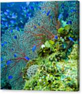 Coral In Truk Canvas Print