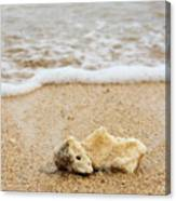 Coral On The Beach Canvas Print
