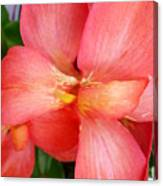 Coral Orchid Canvas Print