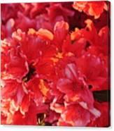 Coral Pink Azaleas Canvas Print