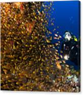 Coral Reef And Diver  Canvas Print