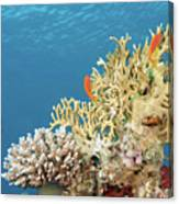 Coral Reef Eco System Canvas Print