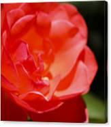 Coral Rose Focus Left Canvas Print
