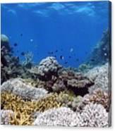 Corals Garden Canvas Print