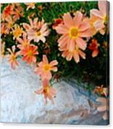 Coreopsis Sienna Sunset Canvas Print