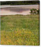 Corepsis Blooming At The Quanah Parker Lake Canvas Print