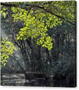 Corkscrew Swamp - In The Autumn Canvas Print