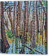 Corkscrew Swamp Sanctuary Canvas Print