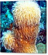 Corky Sea Finger Coral - The Muppet Of The Deep Canvas Print