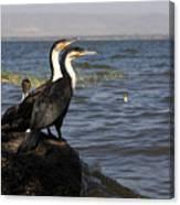 Great Rift Cormorants Canvas Print
