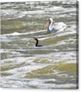 Cormorant And Pelican Canvas Print