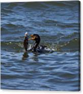 Cormorant Catching A Porgy Canvas Print