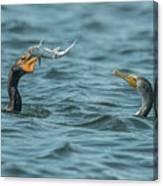 Cormorant Fish Fight Canvas Print