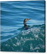 Cormorant In The Water Canvas Print