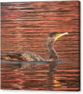 Cormorant On Autumn Red Canvas Print
