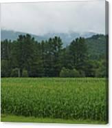 Corn Among The Mountains Canvas Print