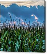 Corn And Clouds Panorama Canvas Print