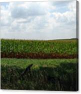 Corn And Clouds Canvas Print