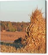 Corn At Harvest Canvas Print