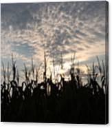 Corn At Sunrise Canvas Print