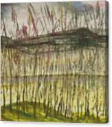 Corn At The Rver,chiang Rai Canvas Print