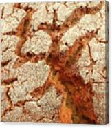 Corn Bread Crust Canvas Print