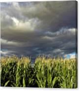 Corn Field Beform Storm Canvas Print