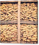 Corn For Winter Canvas Print