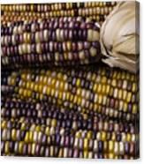Corn Kernals Canvas Print