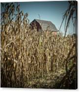 Corn Maze Canvas Print