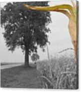 Corn Tree Canvas Print