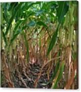 Corn Tunnel Canvas Print