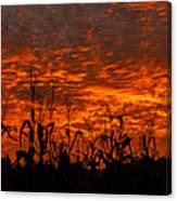 Corn Under A Fiery Sky Canvas Print