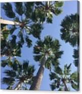 Corner Palms Canvas Print
