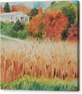 Cornfield In Autumn Canvas Print