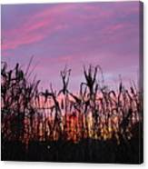 Cornfield Sunset Canvas Print