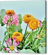 Cornflowers 20 Canvas Print