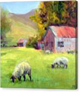 Coromandel New Zealand Sheep Canvas Print