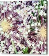 Cosmic Blooms Canvas Print