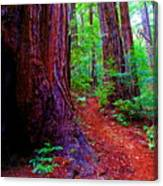Cosmic Redwood Trail On Mt Tamalpais Canvas Print