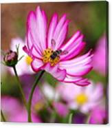 Cosmos Welcoming Canvas Print