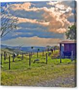 Costa Rica Cow Farm Canvas Print