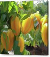 Costa Rica Star Fruit Known As Carambola Canvas Print
