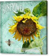 Cottage Garden - Sunflower Standing Tall Canvas Print