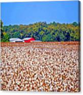 Cotton And The Red Barn Canvas Print