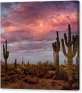 Cotton Candy Pink Sonoran Sunrise  Canvas Print