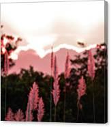 Cotton Candy Sunset 4 Canvas Print