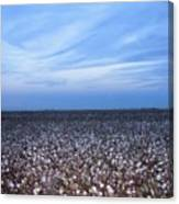 Cotton Fields At Dusk Casa Grande Arizona 2004 Canvas Print