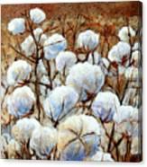 Cotton Fields Canvas Print