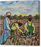 Cotton Pickin Canvas Print